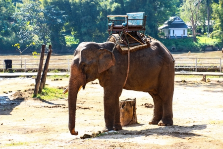 Elephant travel photo