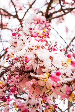 Blossom Thailand photo