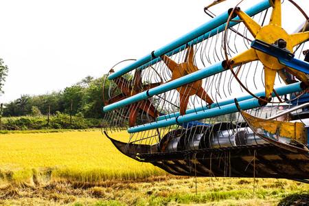 Harvester in rice field photo