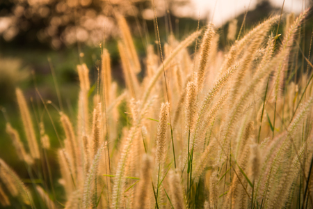 Grass flowers background