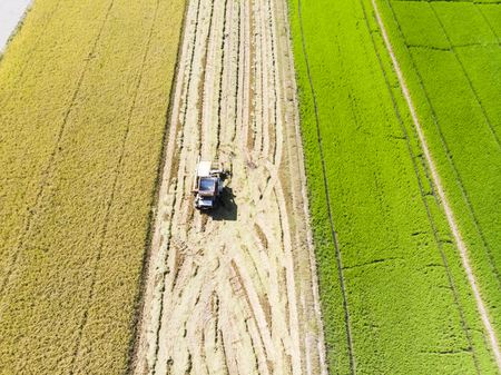 Aerial view of truck harvesting rice in the field