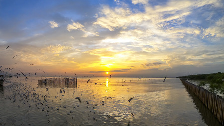 Seagull flying in the sea at sunset