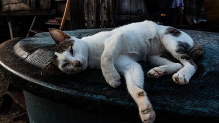 Cat sleep on a bin Imagens