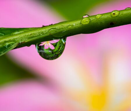 Macro of dew reflextion flower in the nature