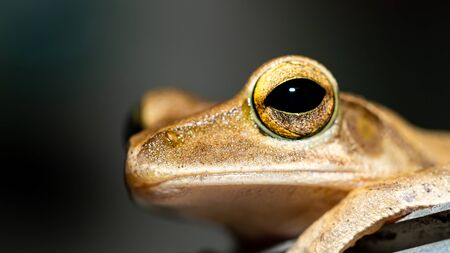 selective focus of Frog in the wild