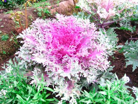 lettuce bloom bautify