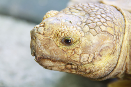 Eyes expression  and Head of Turtle