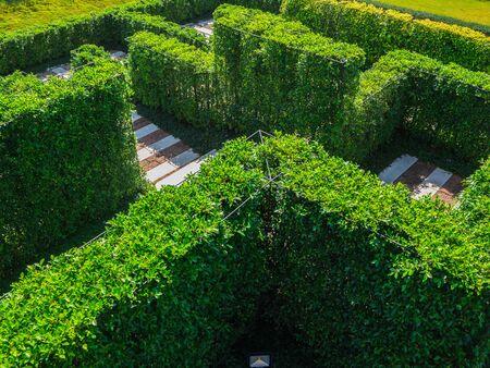 quick hedge: Green garden maze
