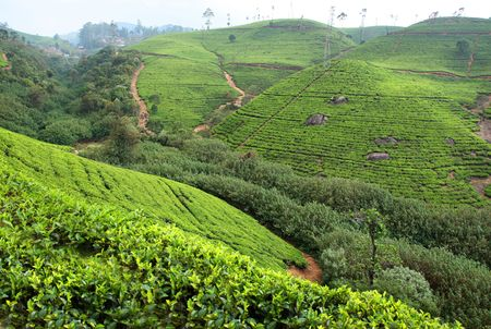 Landscape tea plantation, Sri Lanka Stock Photo