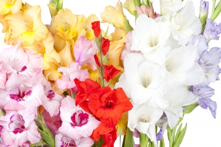 gladiolus: Big bouquet of beautiful colorful gladiolus on a white background Stock Photo