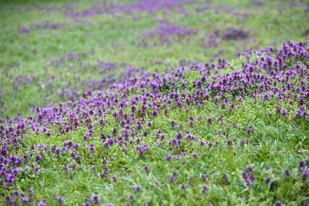 green grass meadow with flowers photo