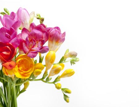 白地にカラフルなフリージアの美しい花束