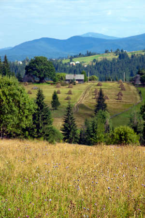 Beautiful summer landscape in the Carpathian mountains