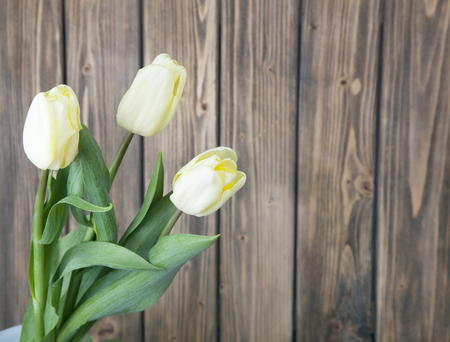 Three beautiful fresh blooming yellow tulips on a wooden background Stock Photo