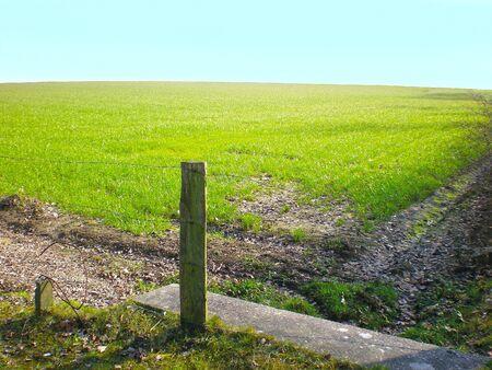grassfield: plain grassfield