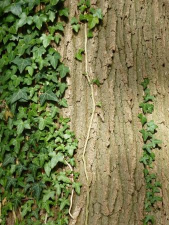 Treebark with bush