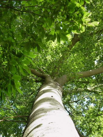 broadleaved tree: Broad leaved tree Stock Photo