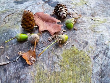 Naturalne dekoracji na skróconych drzewa