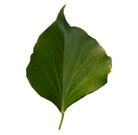 leaf Zdjęcie Seryjne