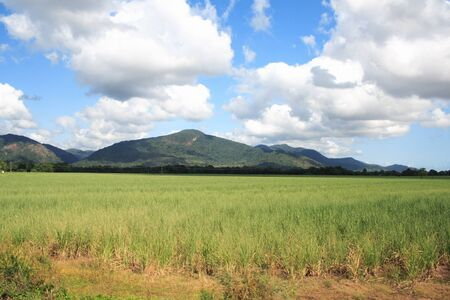 cairns: Australian landscape with mountain close to Cairns
