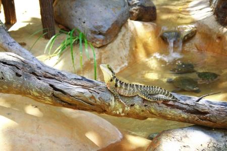 Lizard and turtles Stock Photo - 17071789