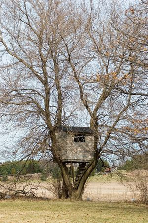 Vertical image of a treehouse