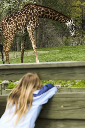 Young girl spying a giraffe through a fence