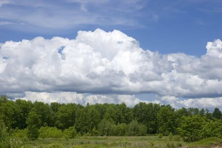 Edge of forest with puffy clouds against blue skies