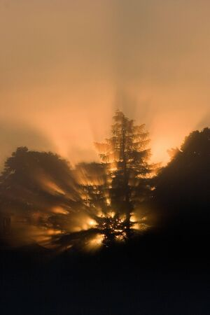 Sunrise through the tree - vertical