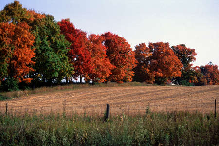 Row of trees in countryside during autumn
