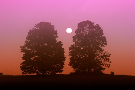 Sun rises between two trees on a brightly colored foggy morning.