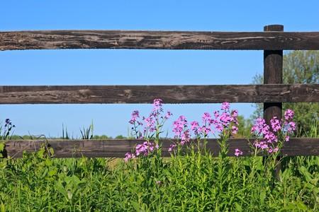 화창한 날에 나무 울타리의 앞에 야생 꽃.