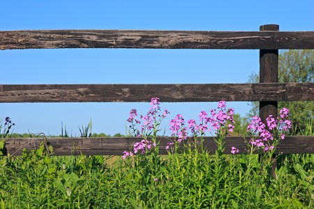pasture fence: Wild flowers in front of a wooden fence on a sunny day. Stock Photo