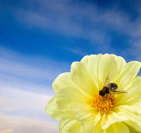 A flower and a bee. The concept of peace and tranquility.