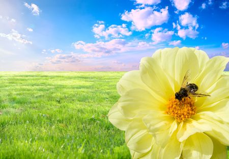 hard love: A bee at work. Concept of the importance of love for the daily hard work.