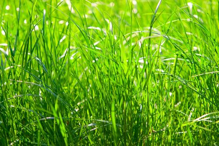 Health and nature concept. Bright green grass photo
