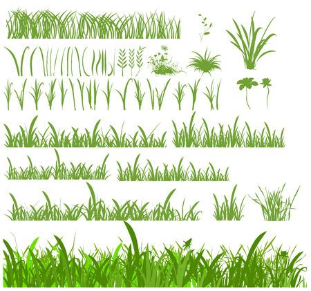 gramineas: Conjunto de diferentes hojas y tallos de pastos y c�spedes.  Vectores