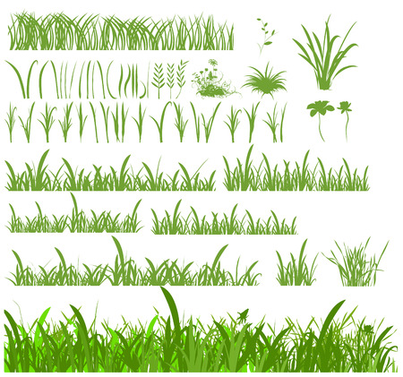 blades of grass: Set of different blades and stems for grasses and lawns.  Illustration