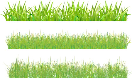 Set grass. Stock Vector - 6883800