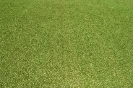 The texture of the herb cover sports field. It is used in baseball, football, cricket, rugby, tennis, golf, field hockey photo