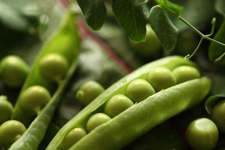Close-up of fresh green pea Stock Photo - 7554155