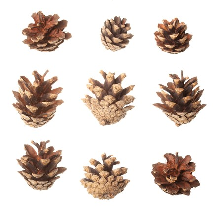cutcat: Set of pine cones
