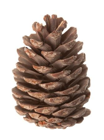 cutcat: Pine cone