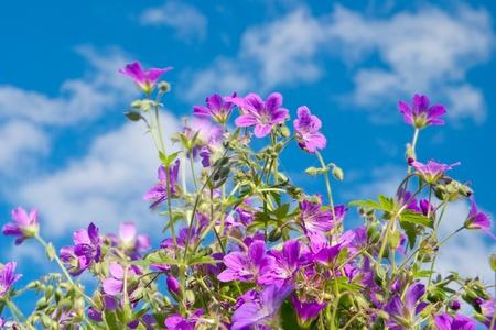 Bright vibrant wild flower Stock Photo - 8807265