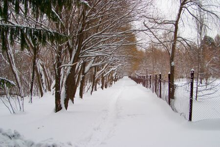 Avenue of trees photo