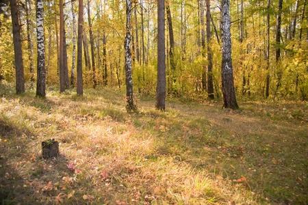 frondage: Autumn wood