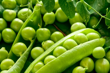 foodie: Green peas in the pod Stock Photo