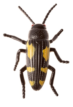cutcat: Black beetle