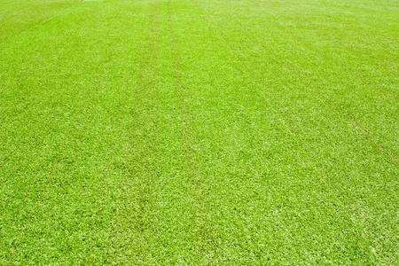 2816 Green grass(63).jpg photo