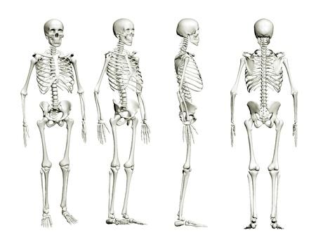 scheletro umano: Scheletro isolato Archivio Fotografico